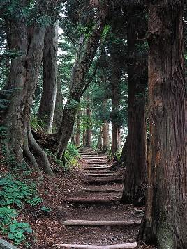 中山道杉並木(奈良井宿)