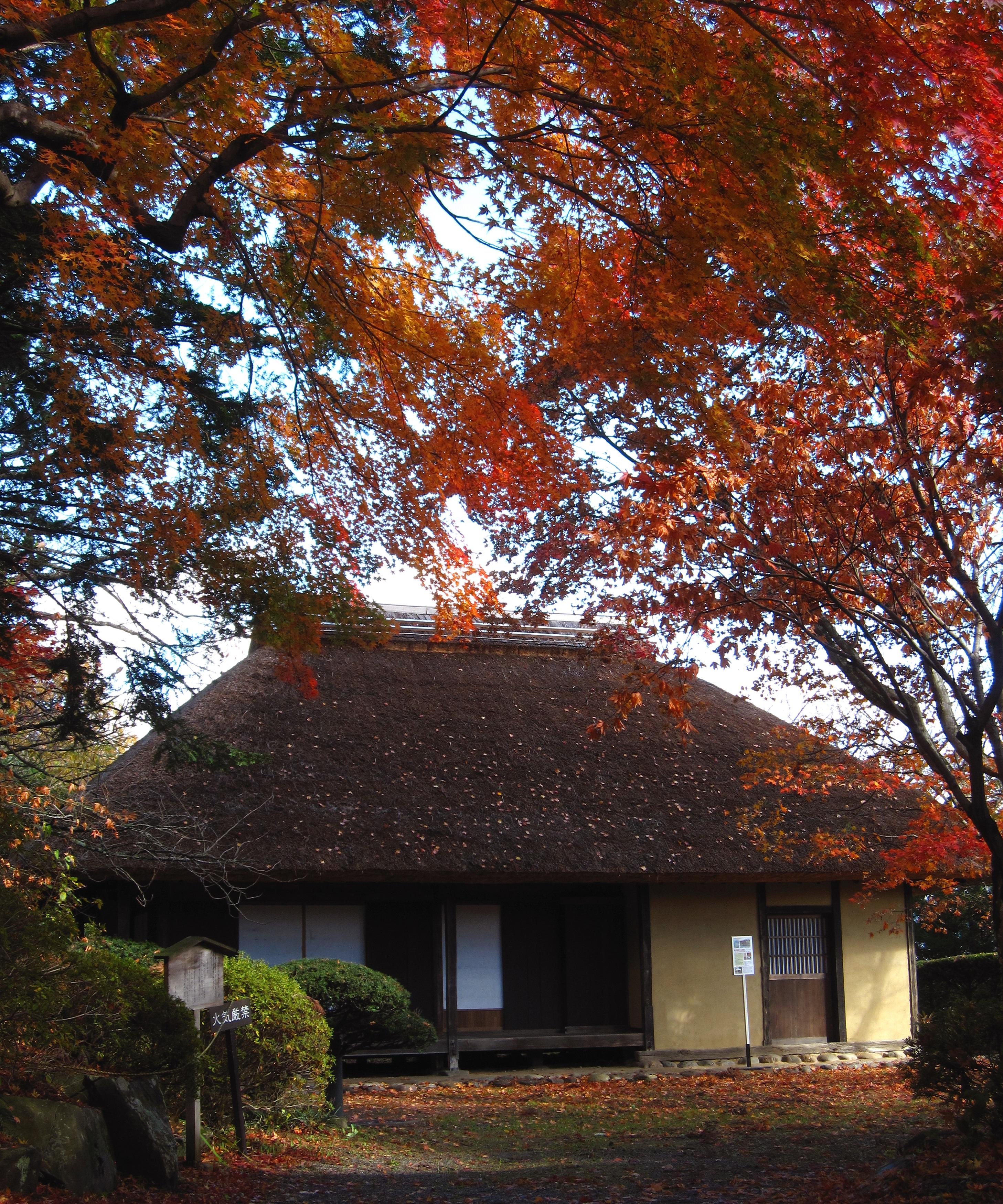 まっ赤な秋に囲まれて