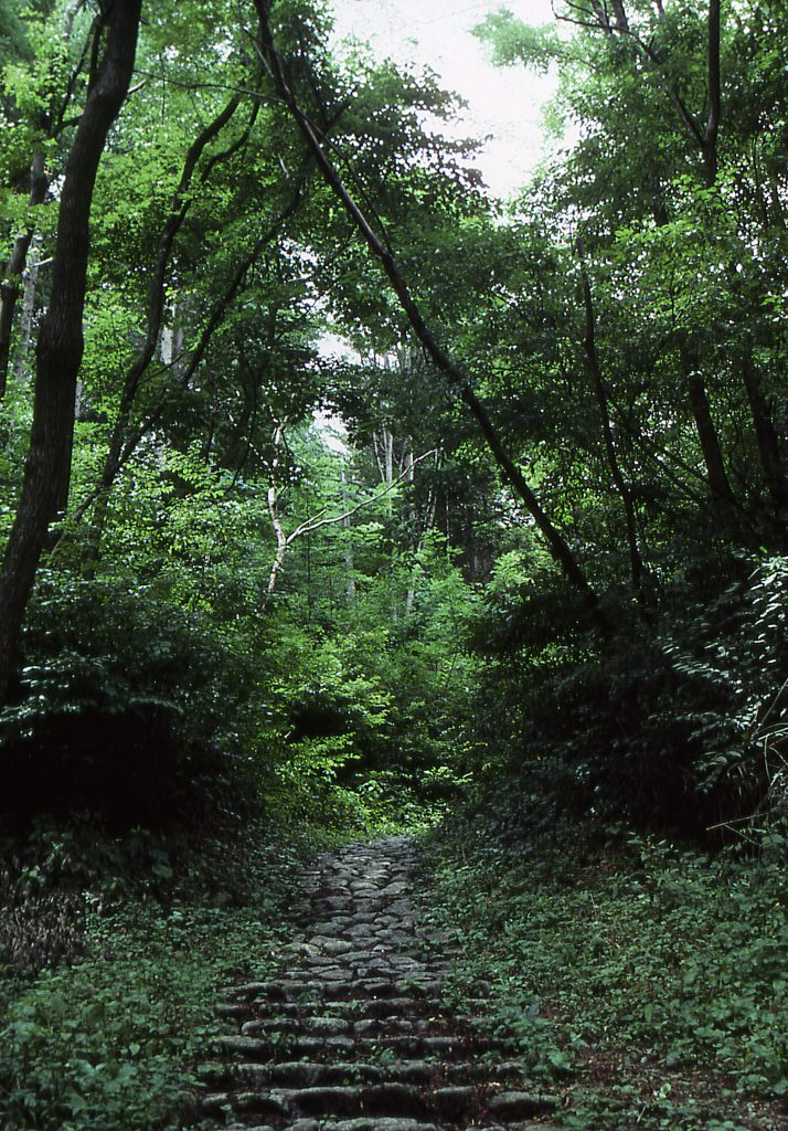 新緑の鳥居峠~奈良井宿を歩こう❢ 【定員に達したため締め切りました】