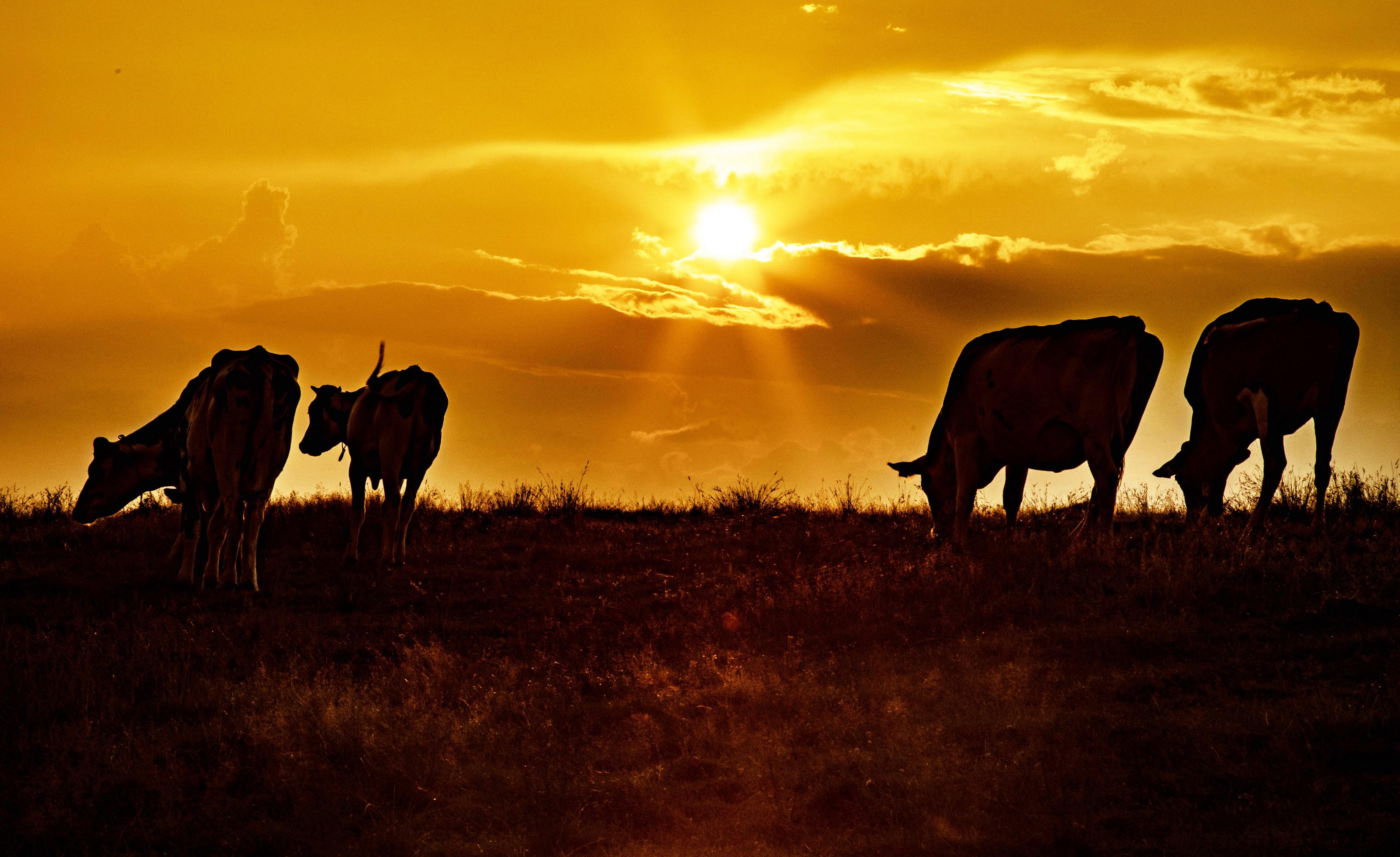 夕焼けの牧場