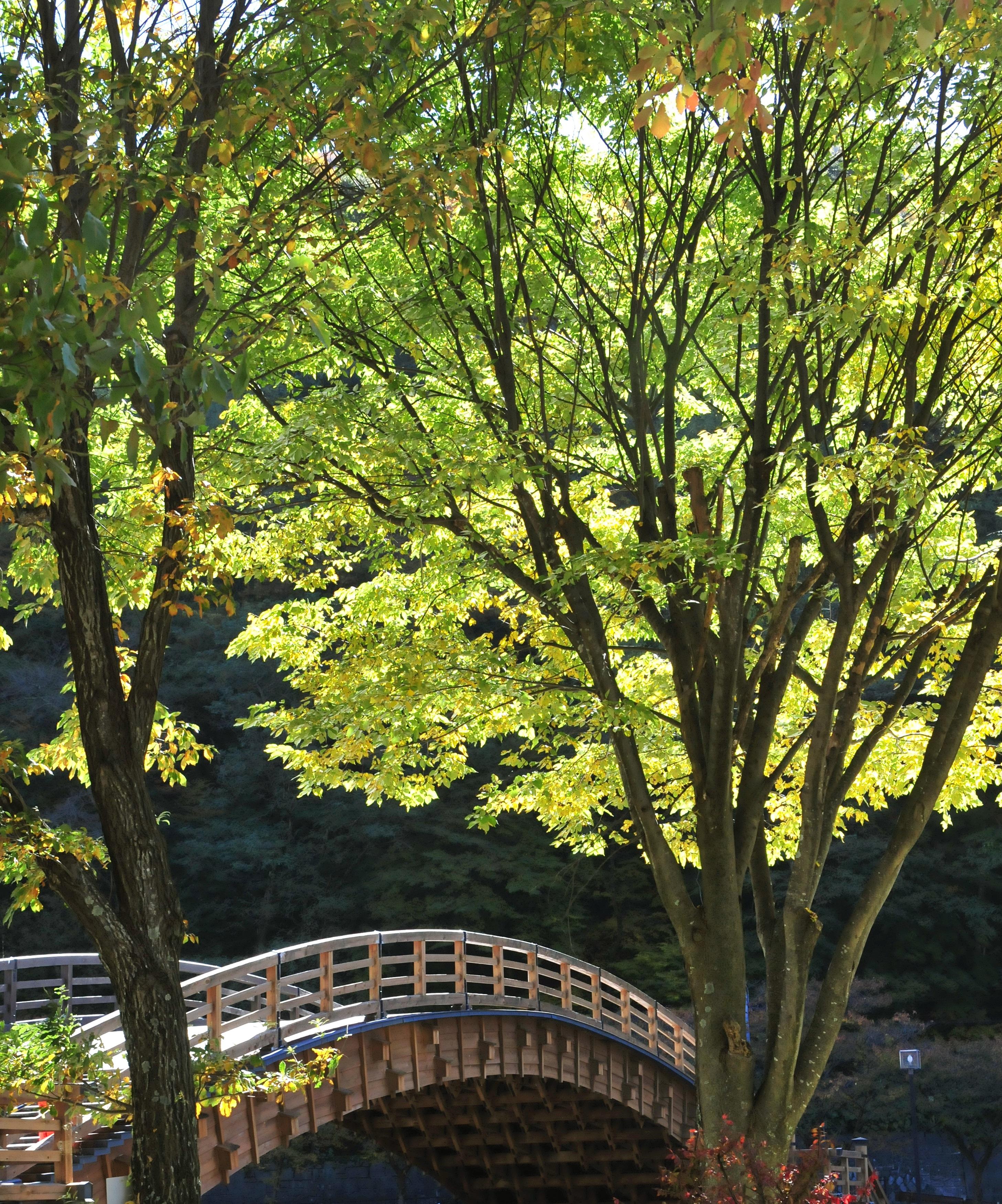 新緑の季節を迎え輝く奈良井大橋