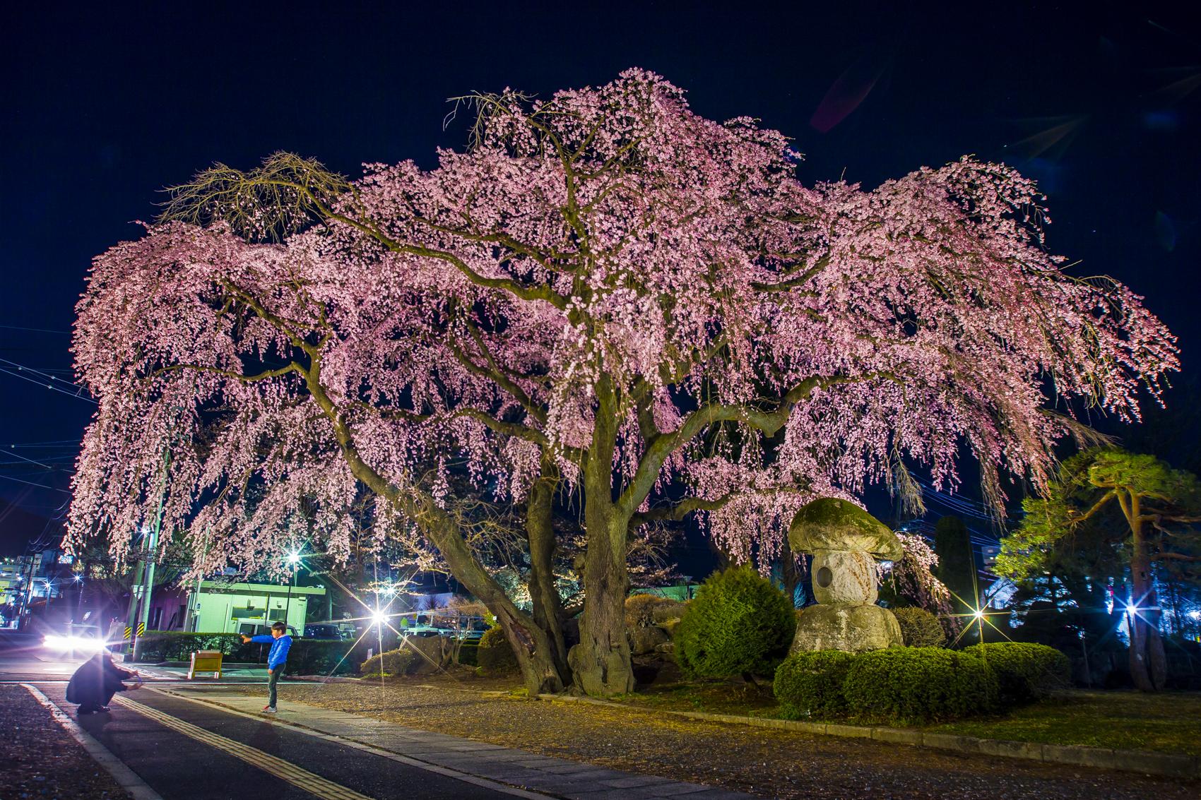 平成最後の夜桜
