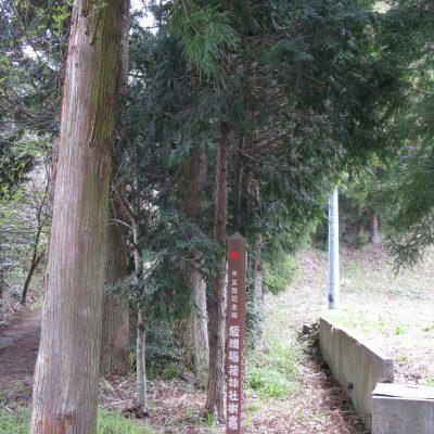 飯綱稲荷神社樹叢