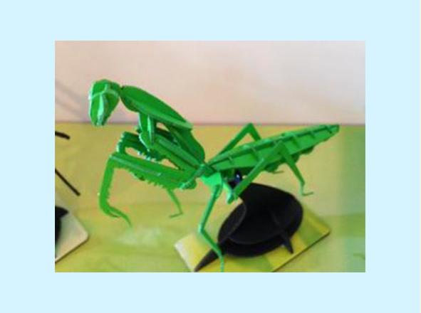 昆虫3Dペーパーパズル