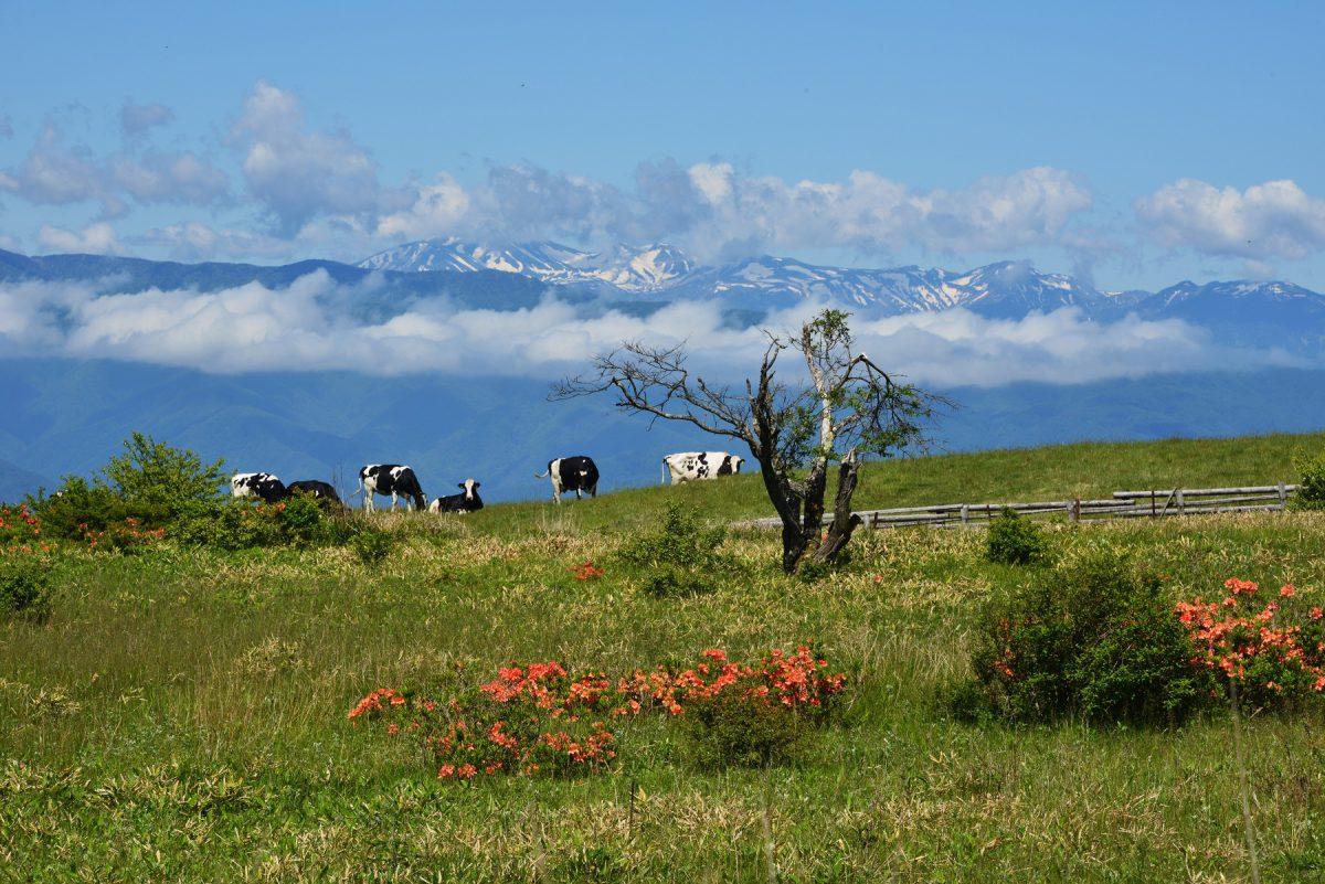 牧歌的な風景
